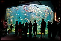 Tourists in front of large tank, Steinhart Aquarium, California Academy of Sciences. San Francisco, California, USA ( color)