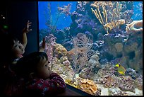 Children looking at aquarium, California Academy of Sciences. San Francisco, California, USA<p>terragalleria.com is not affiliated with the California Academy of Sciences</p> (color)