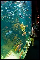School of fish and children, Steinhart Aquarium, California Academy of Sciences. San Francisco, California, USA ( color)