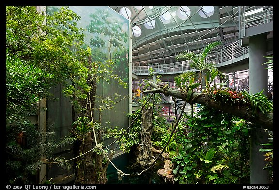 Four-story Rainforest exhibit, California Academy of Sciences. San Francisco, California, USA (color)