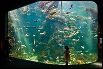 Girl looks at Northern California Aquarium, California Academy of Sciences. San Francisco, California, USA<p>terragalleria.com is not affiliated with the California Academy of Sciences</p> (color)