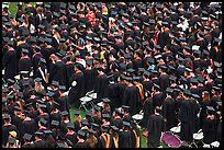 Rows of graduates in academic costume. Stanford University, California, USA ( color)