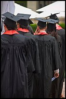 Graduates with robes and square caps seen from behind. Stanford University, California, USA ( color)