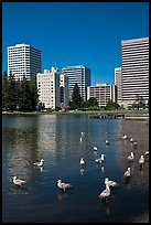Ducks and skyline, Lake Merritt. Oakland, California, USA ( color)