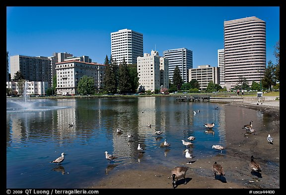 Ducks in Lake Merritt, a large tidal lagoon. Oakland, California, USA (color)