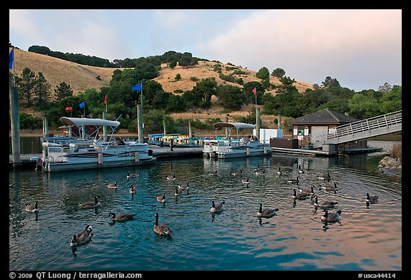 Ducks, marina, and hills Lake Chabot, Castro Valley. Oakland, California, USA (color)