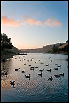 Lake Chabot with ducks at sunset, Castro Valley. Oakland, California, USA ( color)