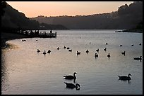 Ducks and pier at sunset, Lake Chabot, Castro Valley. Oakland, California, USA ( color)