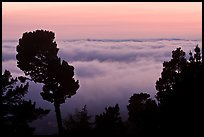 Low clouds at sunset seen from foothills. Oakland, California, USA ( color)