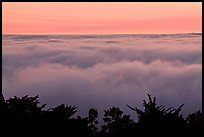 Sea of clouds at sunset. Oakland, California, USA (color)