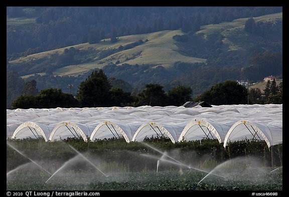 Canopies for raspberry growing. Watsonville, California, USA (color)