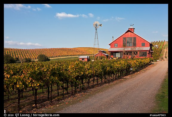 Red barn in vineyard. Napa Valley, California, USA (color)