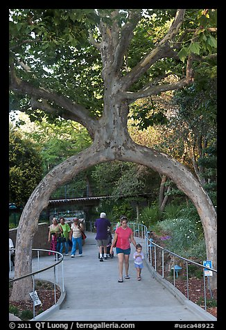 Archway formed by a tree, Gilroy Gardens. California, USA (color)
