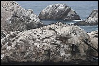 Bird island. Point Lobos State Preserve, California, USA (color)