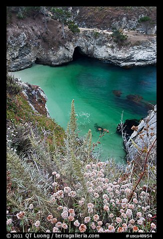 Flowers and cove with green water. Point Lobos State Preserve, California, USA (color)