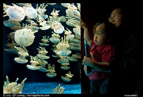 Mother and infant look at Jelly exhibit, Monterey Bay Aquarium. Monterey, California, USA (color)
