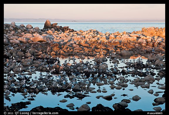 Seabirds and rocks at sunset. Pacific Grove, California, USA (color)