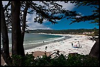 Carmel Beach framed by Monterey Cypress. Carmel-by-the-Sea, California, USA (color)
