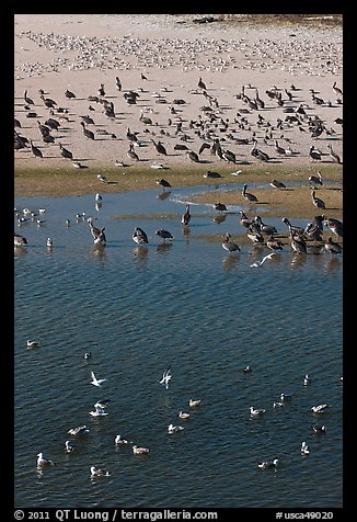 Birds, Carmel River State Beach. Carmel-by-the-Sea, California, USA (color)