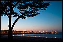 Monterey harbor and cypress tree at sunset. Monterey, California, USA (color)