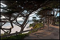 Path and Monterey Cypress bordering beach. Carmel-by-the-Sea, California, USA (color)