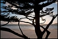 Cypress and ocean, late afternoon. Carmel-by-the-Sea, California, USA (color)
