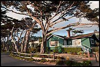 Residential homes and cypress trees. Carmel-by-the-Sea, California, USA (color)