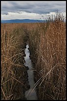 Narrow creek and tall grasses, Alviso. San Jose, California, USA ( color)