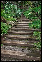 Uphill path, Hakone gardens. Saragota,  California, USA ( color)