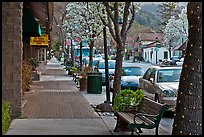 Street with blossoming trees. Saragota,  California, USA ( color)