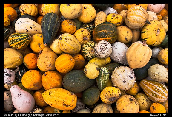 Gourds and pumpkins. Half Moon Bay, California, USA (color)