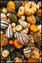 Mix of squash and gourds. Half Moon Bay, California, USA ( color)