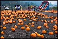 Pumpkin patch and slides. Half Moon Bay, California, USA ( color)