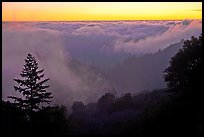 Sea of clouds at sunset above Santa Cruz Mountains. California, USA (color)