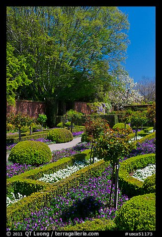 Hedges and flowers, walled garden, Filoli estate. Woodside,  California, USA (color)