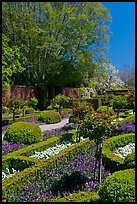 Hedges and flowers, walled garden, Filoli estate. Woodside,  California, USA ( color)