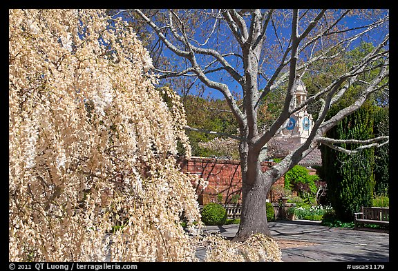Tree blossoms in Filoli garden. Woodside,  California, USA (color)