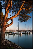 Municipal marina, Vallejo. San Pablo Bay, California, USA (color)