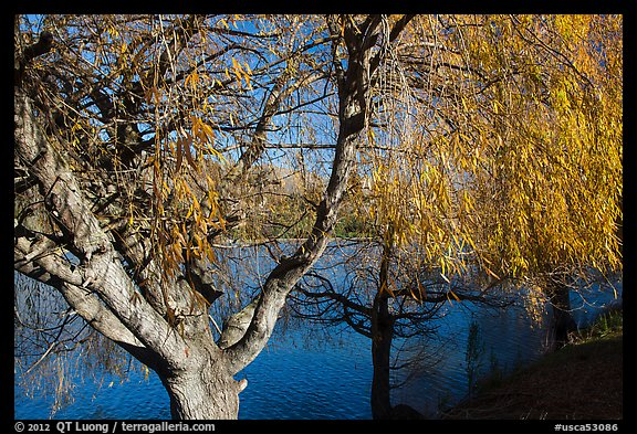 Pond and willows in autumn, Ed Levin County Park. California, USA (color)