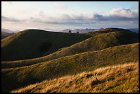 Hills, Mt Tamalpais State Park. California, USA ( color)