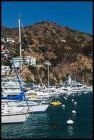 Yachts, Avalon harbor, Catalina Island. California, USA ( color)