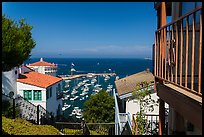 Hillside houses overlooking harbor, Avalon Bay, Santa Catalina Island. California, USA (color)