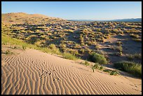 Sand ripples on Kelso Dunes, early morning. Mojave National Preserve, California, USA (color)