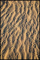 Close-up of sand ripples with animal tracks. Mojave National Preserve, California, USA ( color)
