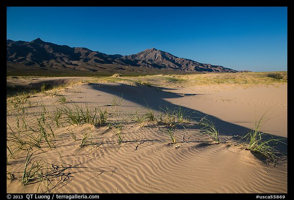On Kelso Sand Dunes. Mojave National Preserve, California, USA (color)