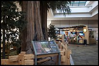 Interpretive sign, sequoias, and cafe, Fresno Yosemite Airport. California, USA ( color)