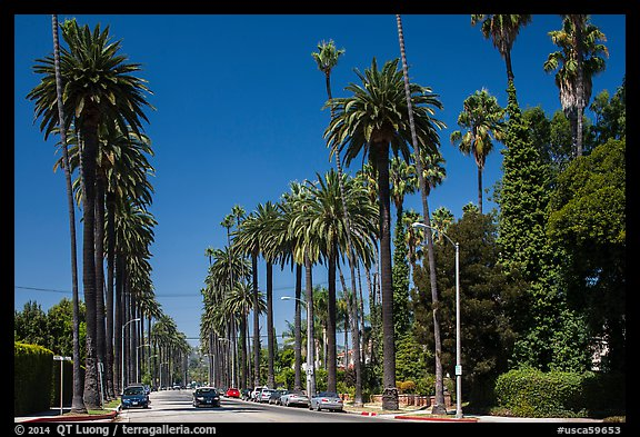 Street lined up with tall palm trees. Beverly Hills, Los Angeles, California, USA (color)