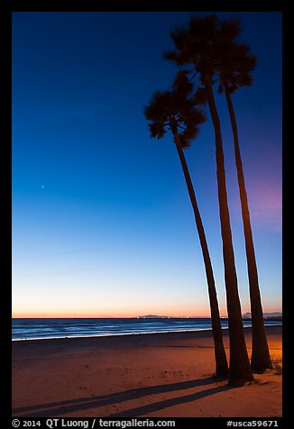 Palm trees and empty beach at sunset. Newport Beach, Orange County, California, USA (color)
