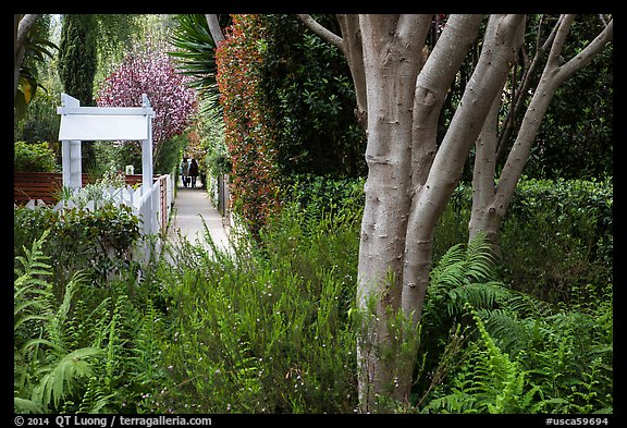 Lush vegetation surrounding residential alleys. Venice, Los Angeles, California, USA (color)