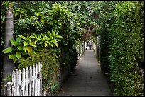 Lush pedestrian alley, with man walking dog in distance. Venice, Los Angeles, California, USA ( color)